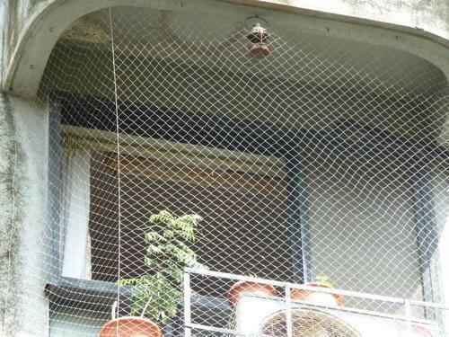 картинка сеть от голубей