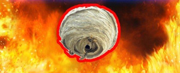 картнка сжечь гнездо