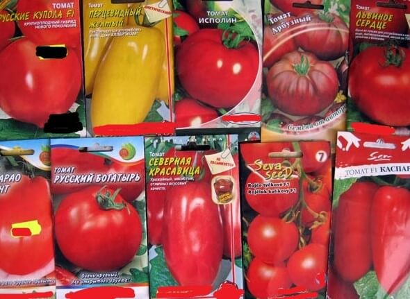 картинка сорта помидор