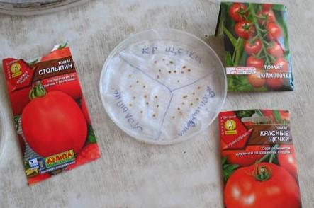 картинка замачивание семян