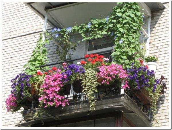 картинка кашпо на стандартном балконе