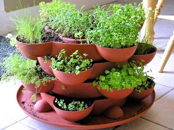 Зелень на балконе: секреты выращивания зелени и овощей