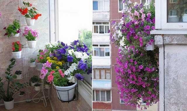 картинка петуния на балконе