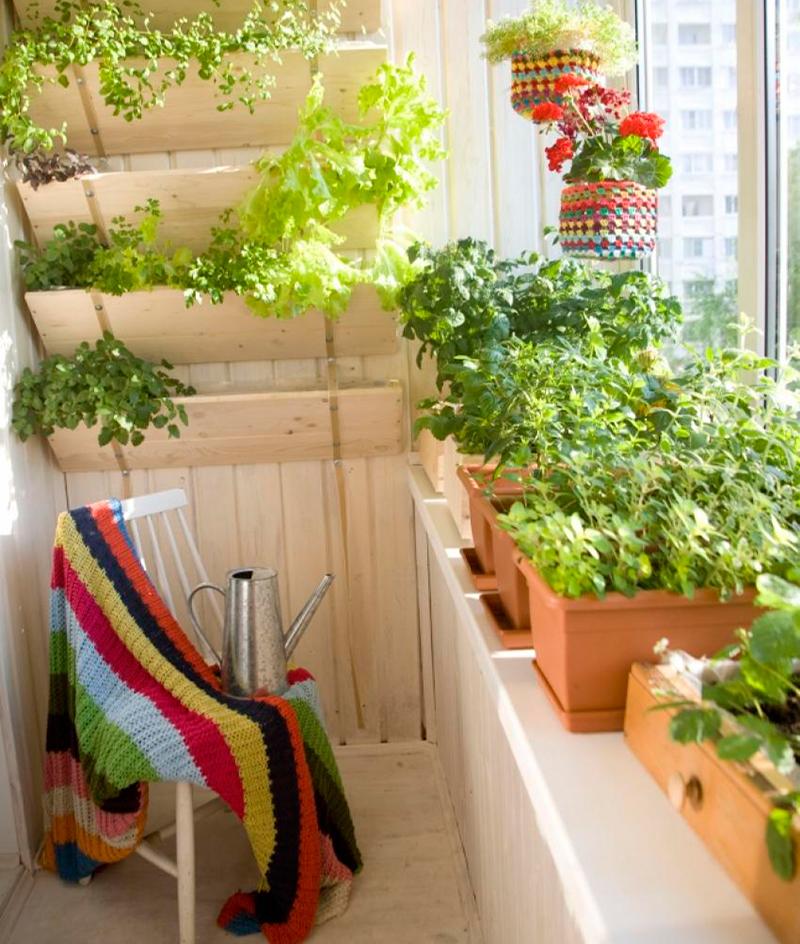 картинка зелень на балконе
