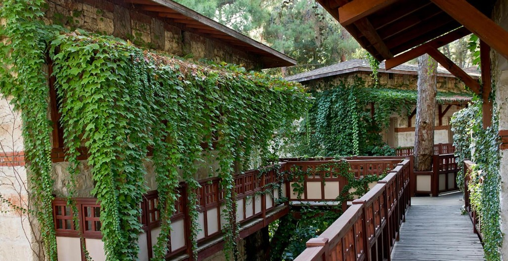 картинка плющ на балконе