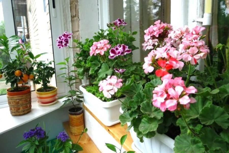 картинка цветы на балконе