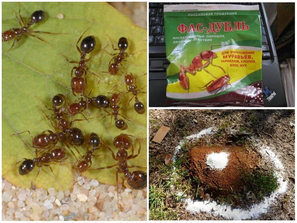 картинка химическое средство от муравьев
