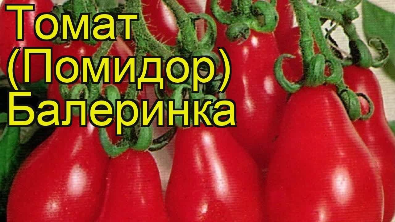 """картинка томат """"Балеринка"""""""