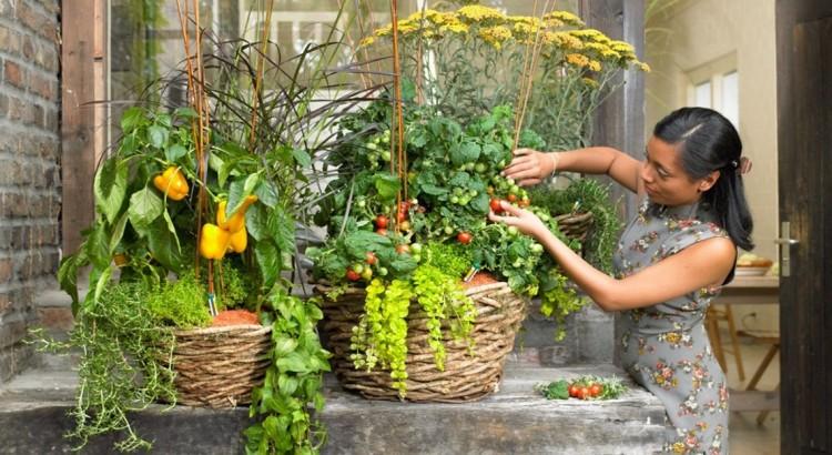картинка овощи на балконе
