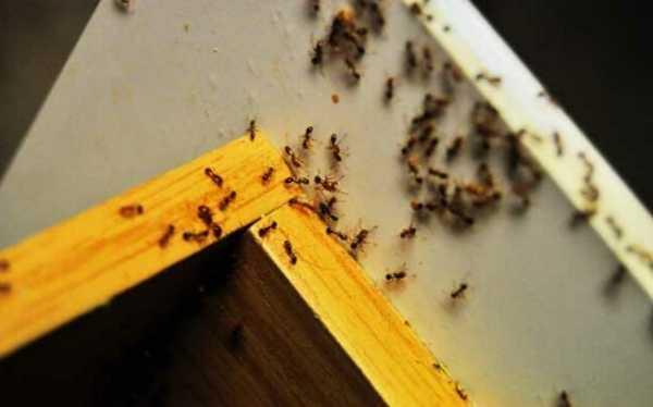 Как избавиться от муравьев на балконе