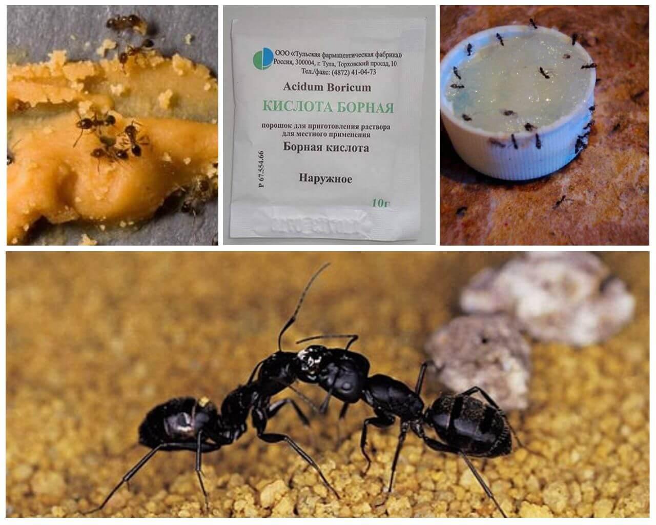 картинка борная кислота от муравьев