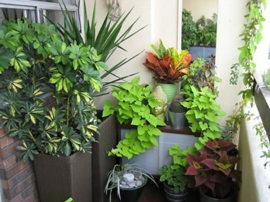 картинка летний сад на балконе