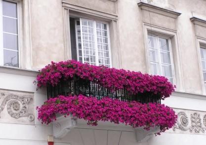 картинка балкон-цветник
