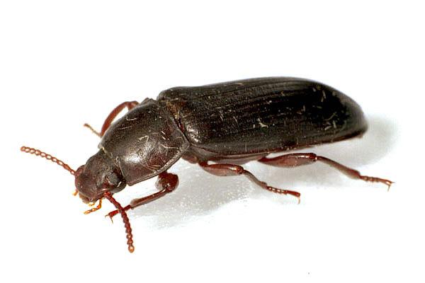 Черные жуки на балконе