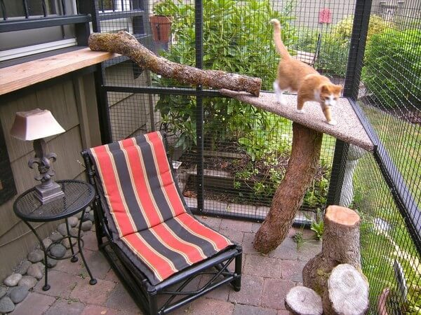 картинка вольер для кошки