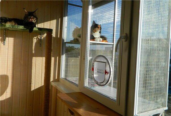 картинка окно с дверцей для выгула