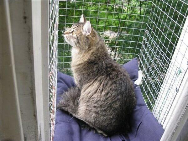 Балкон для кошек