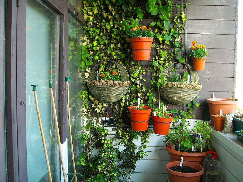 картинка вертикальное озеленение