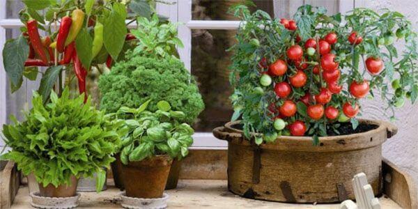 картинка огород на балконе