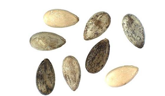 картинка семена арбуза
