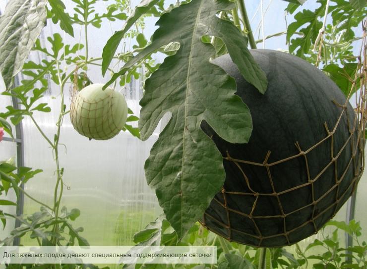 картинка сеточки для поддержания арбузов