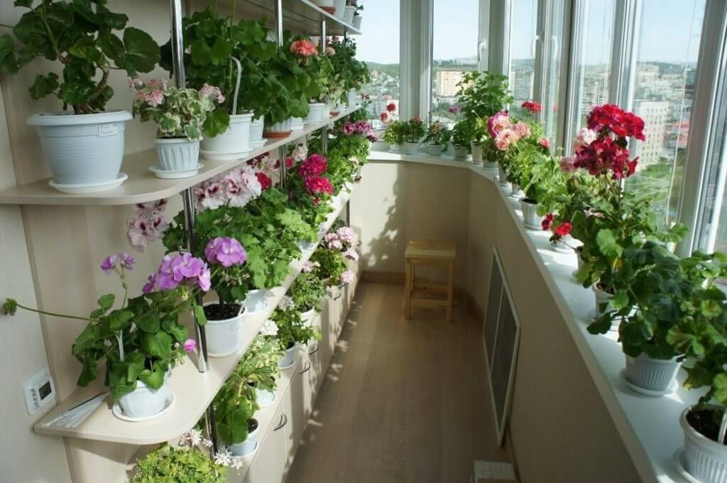 картинка озеленение балкона с южной стороны