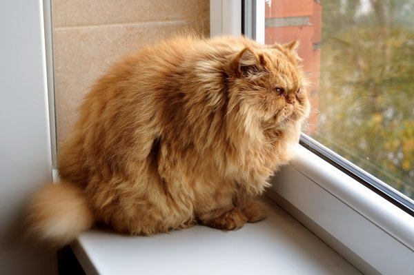 картина кот на подоконнике