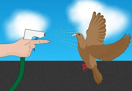 картинка репеленты от голубей
