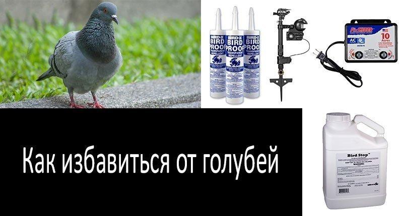 картинка как избавиться от голубей