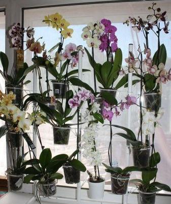 картинка орхидеи на подоконнике